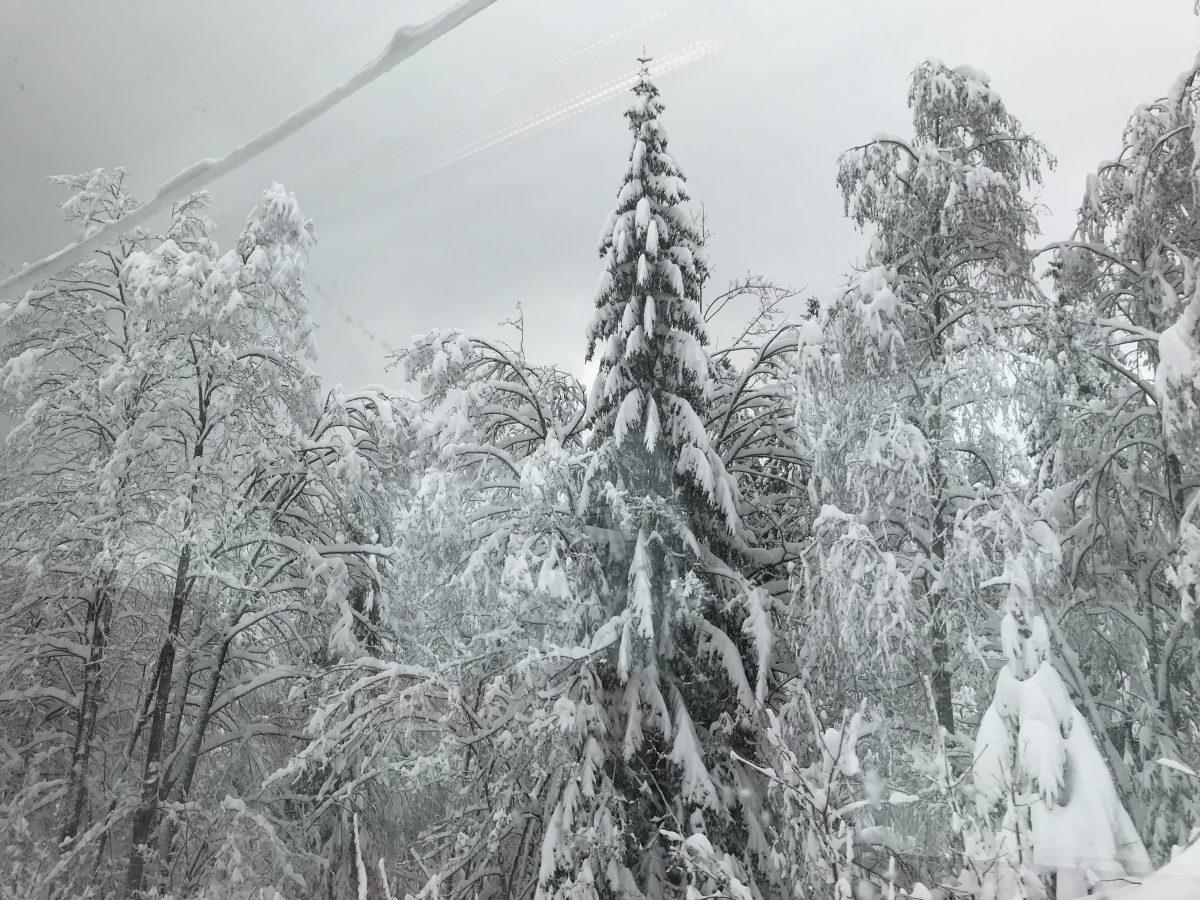 """Mit dem Zug durchs Winter Wonderland: Der EC """"Transalpin"""" im Winter"""
